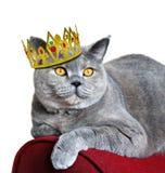 kot królowa Fotografia Royalty Free