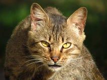 Kot który kocha tropić w dniu Zdjęcie Royalty Free