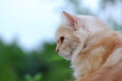 Kot kucający na balkonie Boczny widok Fotografia Royalty Free