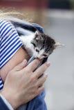 Kot kurtka Zdjęcie Royalty Free