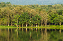 7 kot Lake side#3. Beautiful 7 Kot Lake side in Saraburi Province,Thailand royalty free stock photography