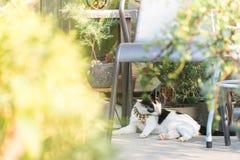 kot liże swój włosy Zdjęcie Royalty Free
