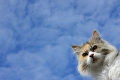 kot śliczny Zdjęcia Royalty Free