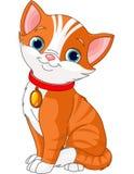 kot śliczny Zdjęcia Stock