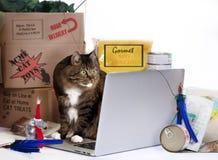 Kot linii zakupy szaleństwo Obrazy Royalty Free