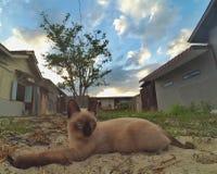 Kot lubi tygrysa Obrazy Royalty Free