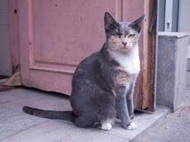 kot mądry Fotografia Stock