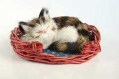 kot mały Obraz Royalty Free