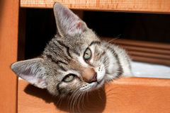 kot mały Zdjęcie Royalty Free