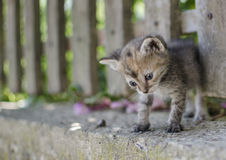 kot mały Zdjęcia Royalty Free