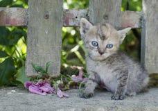 kot mały Obrazy Royalty Free
