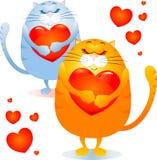 kot miłość Zdjęcie Stock