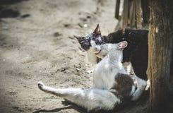 Kot miłość Zdjęcia Royalty Free