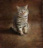 kot śmieszny Obrazy Stock