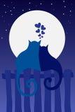 kot miłość Obrazy Stock