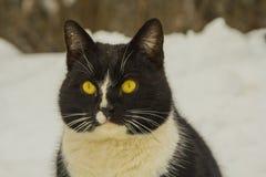 Kot myśleć o swój sposobie życia obrazy royalty free