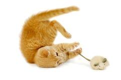 kot mysz Zdjęcie Stock
