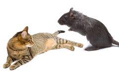 kot mysz obrazy stock