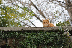 Kot na ścianie Obrazy Royalty Free