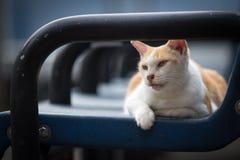 Kot na ławce Obraz Stock