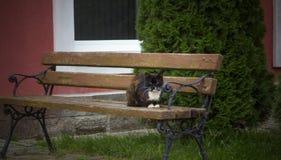Kot na ławce Obraz Royalty Free