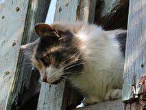 Kot na balkonie Zdjęcia Stock