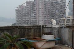 Kot na balkonie przed wieżowem obraz stock