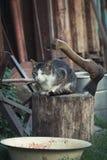Kot na beli Obrazy Stock