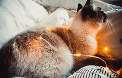 Kot na białym łóżku obraz stock
