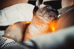 Kot na białym łóżku fotografia stock