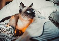 Kot na białym łóżku obrazy royalty free