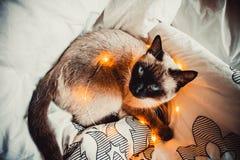 Kot na białym łóżku fotografia royalty free