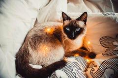 Kot na białym łóżku zdjęcia stock