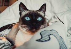 Kot na białym łóżku zdjęcie stock