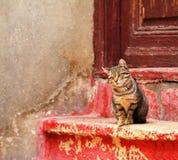 Kot na czerwonych kamiennych schodkach przed starym domem, Fotografia Royalty Free