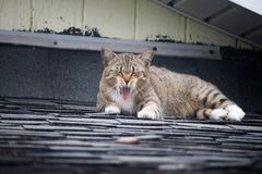 Kot na dachu Zdjęcie Stock