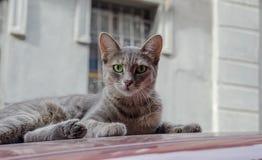 Kot na dachu samochód Obraz Stock