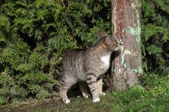 Kot na drzewie zdjęcie royalty free