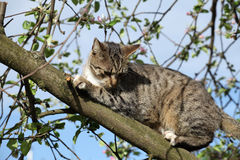 Kot na drzewie obraz stock