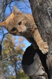 Kot na drzewie Fotografia Royalty Free