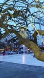 Kot na drzewie Zdjęcia Stock