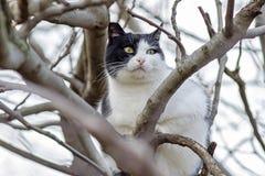 Kot na drzewie 1 Zdjęcie Royalty Free