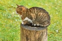 Kot na drzewnym fiszorku fotografia stock