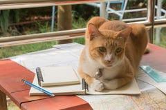 Kot na górze mój pracy Obraz Stock