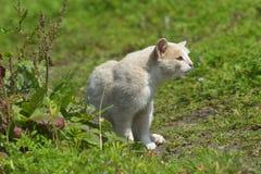 Kot na gazonie Zdjęcie Royalty Free