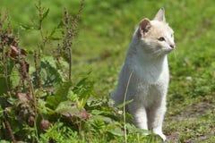 Kot na gazonie Zdjęcia Stock