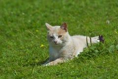 Kot na gazonie Zdjęcie Stock