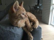 Kot na kanapie Zdjęcie Stock