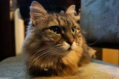 Kot na krześle obrazy stock
