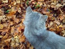 Kot na liściach Fotografia Royalty Free
